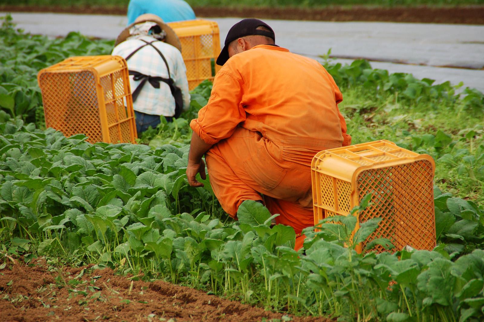 農業法人の労務管理のイメージ